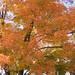 06 - 10/17/09 Fall Colors & Shoot Reconnaissance