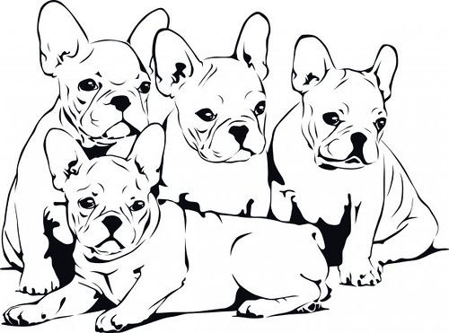 french bulldog babies  northern working pugs  flickr