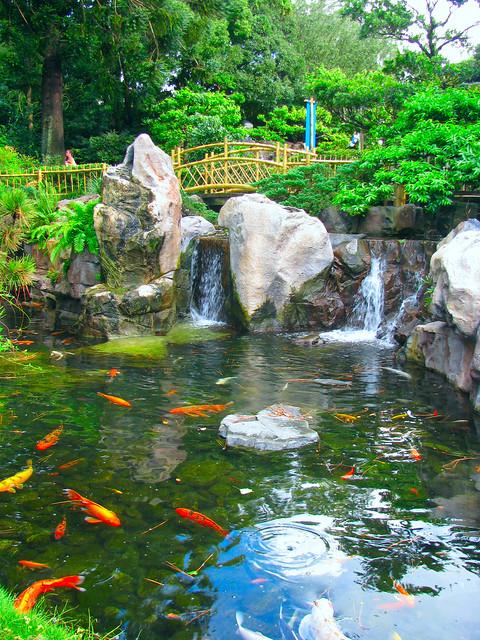 Fish Pond Travel Bags
