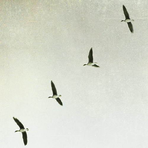 fly away | by *glimpse*