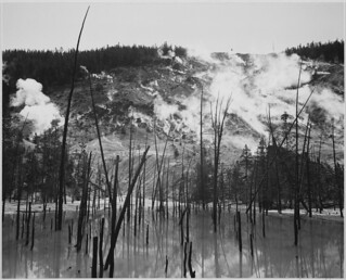 "Barren tree trunks rising from water in foreground, stream rising from mountains in background, ""Roaring Mountain, Yellowstone National Park,"" Wyoming. 