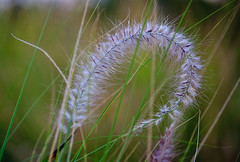 Grass | by dicktay2000
