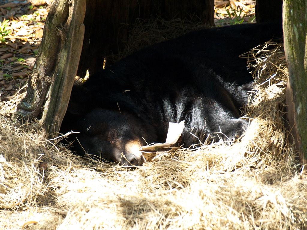 Sleeping Bear Bed And Breakfast Empire Mi