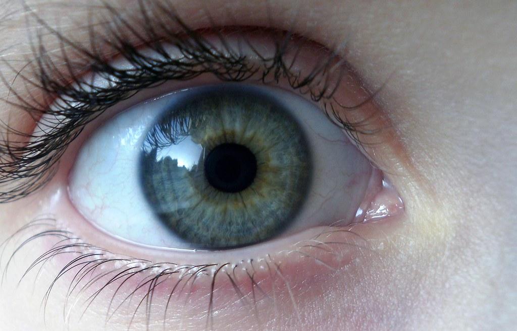 creation of the human eye essay