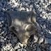 Karoo fossil