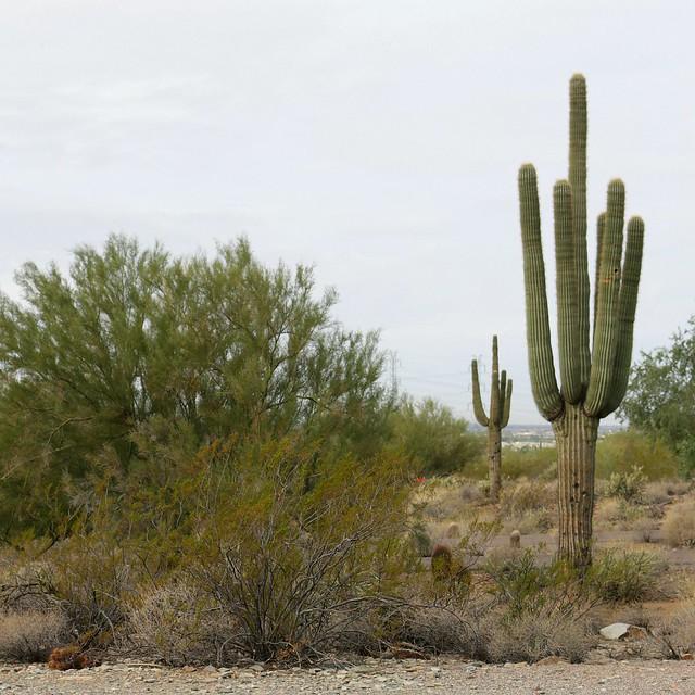 Taliesin West Phoenix Tanvii.com 1