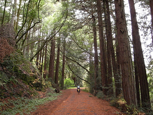 Cross Marin Trail | by cosmiccountry