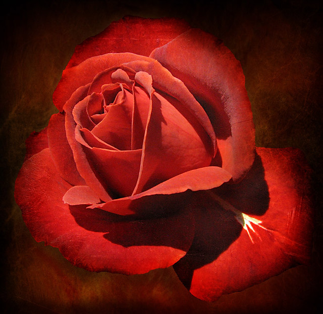 """Friendship is the breathing rose with sweets in every fold """""""