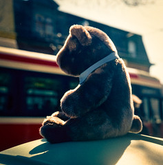 Mr T. Bear Saver Of The Environment Waits and Waits and Waits For The Right Streetcar To Come Along, Thanks TTC | by Metrix X