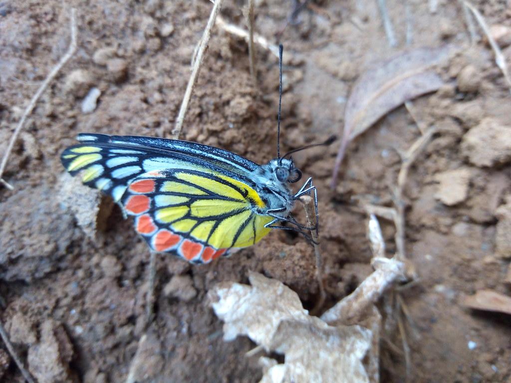 Butterlfy by Vijay Kumar, Kangra Himachal Pradesh