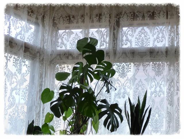 viherkasvit ja kuviollinen valoverho