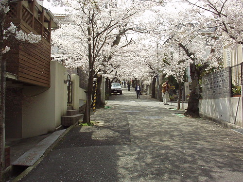 Tunnel of Cherry Flower | by n_sky