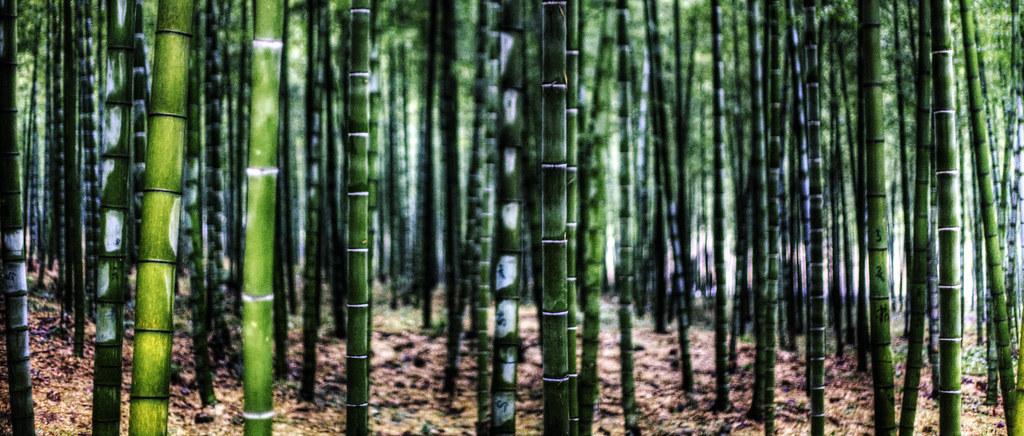 Bamboo Anji Produces 12 Million Commercial Bamboo Poles