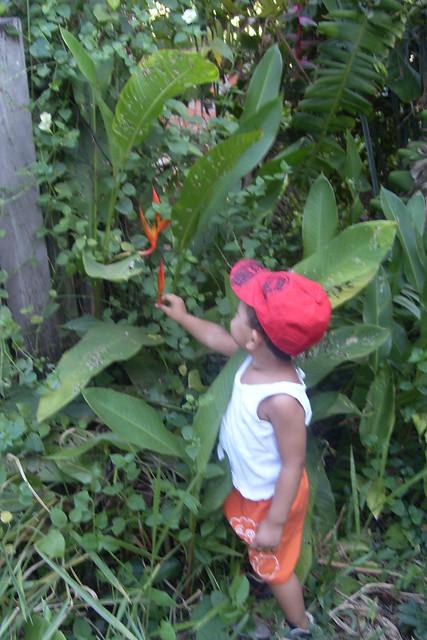 O menino no jardim de flores tropicais Flickr - Photo ...