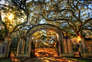 Wormsloe, the Endless Forest of Savannah - 16,000 pixels wide! | by Stuck in Customs