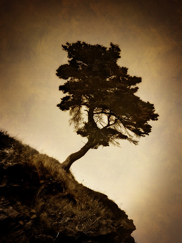 Lonesome Tree | by Clyde Barrett