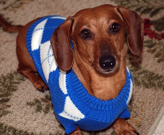 Free Dog Sweater With Legs Pattern