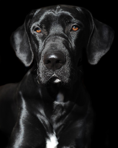 Black Beauty | by dog ma
