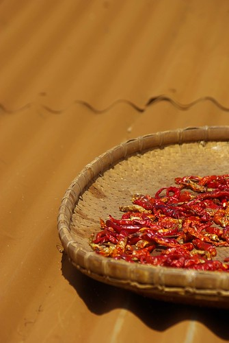 Drying Chili - Southern Laos | by The Hungry Cyclist