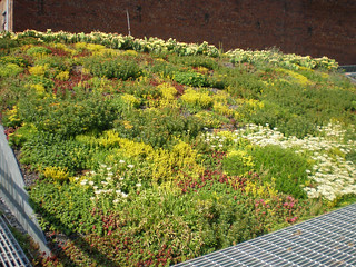 Blooming Sedum, Summer 2009 | by Landscape Architects