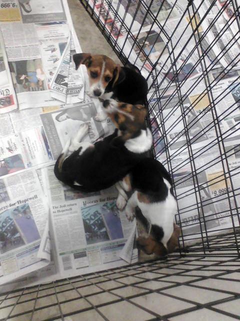 Petsmart Bell On The Ribbon Dog Training