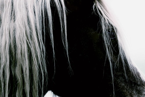 Black and White Horse | by justine.allan
