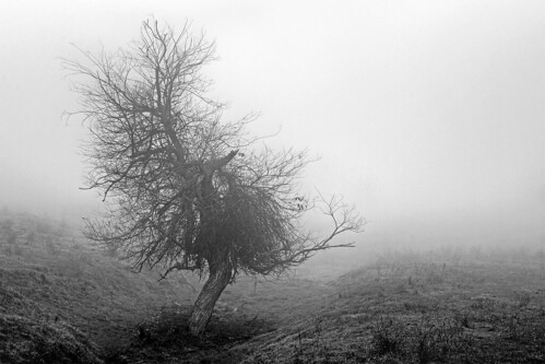Foggy winter tree | by ongopt50