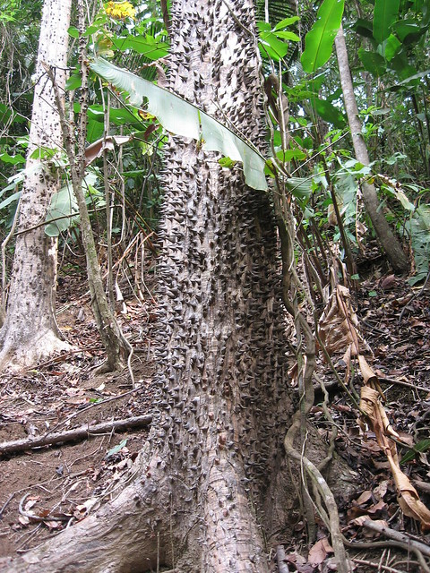 Thorn Tree Flickr Photo Sharing