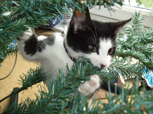 Cat nomming on Christmas tree | by bigpresh