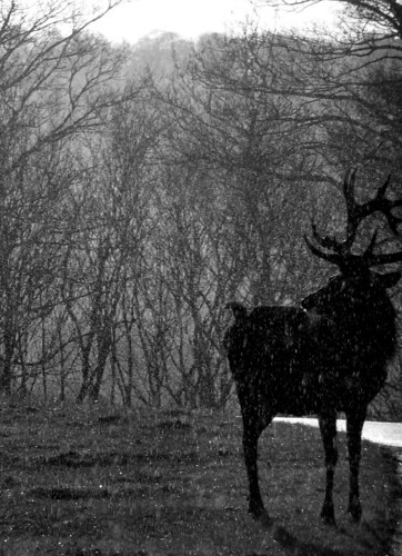 Stag | by Defining  Beauty
