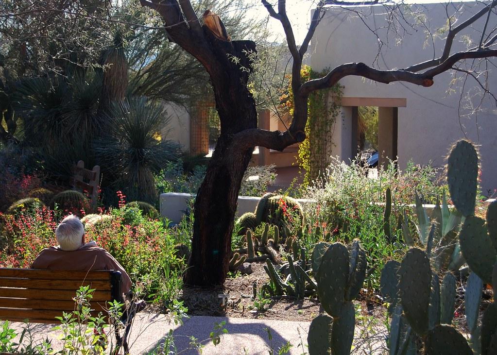 Tohono Chul Park Tucson Arizona This Place Was A Real