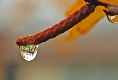 Our House In a Waterdrop | by Darrell Wyatt