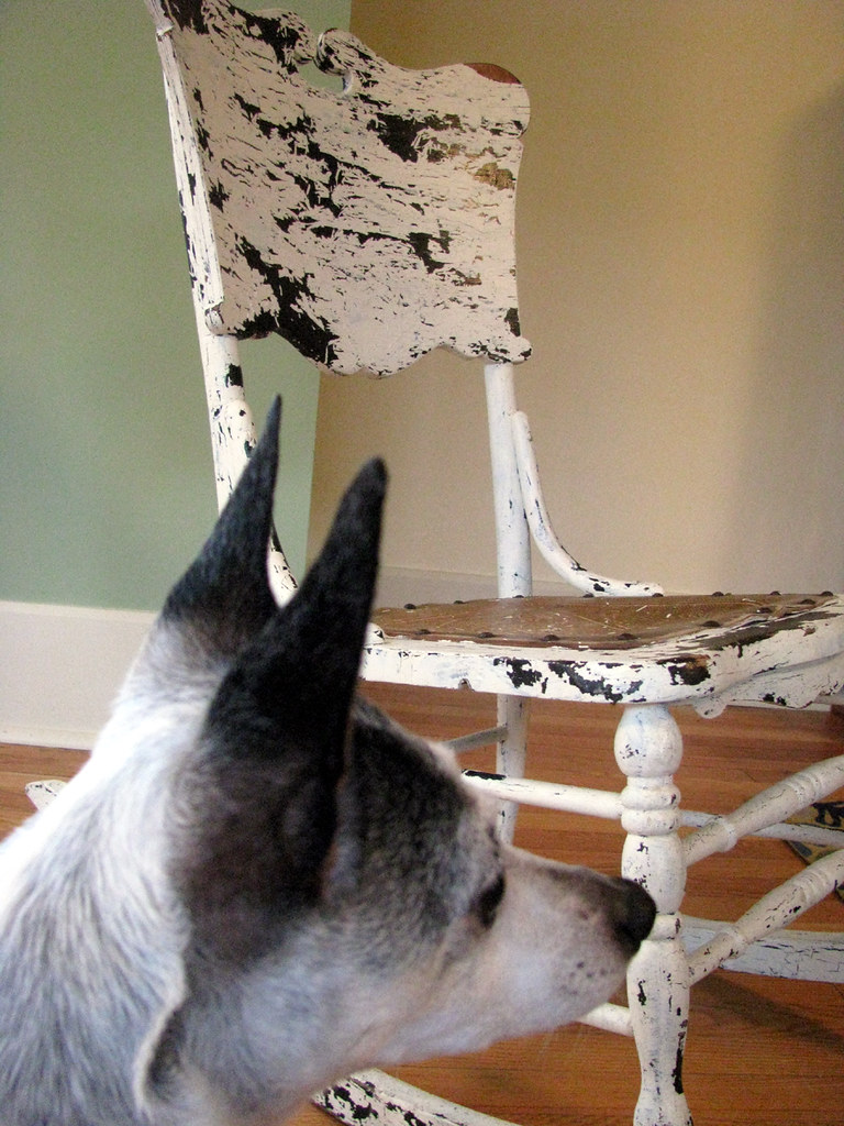 Surprising Dog With Rocking Chair Jill Flickr Squirreltailoven Fun Painted Chair Ideas Images Squirreltailovenorg