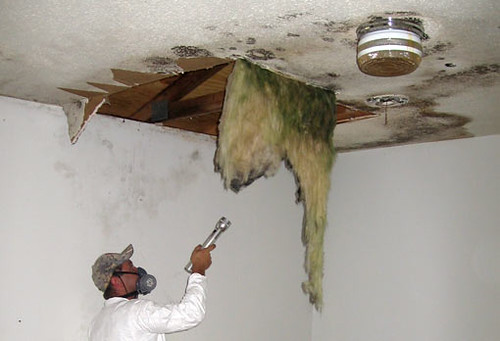 Mold Damage | by judyjoshch