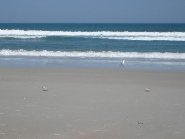 Butler Beach Saint Augustine Fl Aa