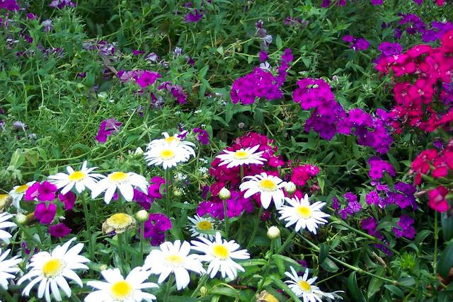 Harry P Leu Botanical Gardens Orlando Flickr Photo Sharing