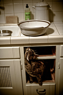 February 26, 2010 - Cat in the Cupboard | by nerdcoregirl