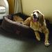 Votre chien voyage avec vous?2_72dpi