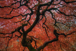 Under the Tree at Portland Japanese Garden | by David Gn Photography