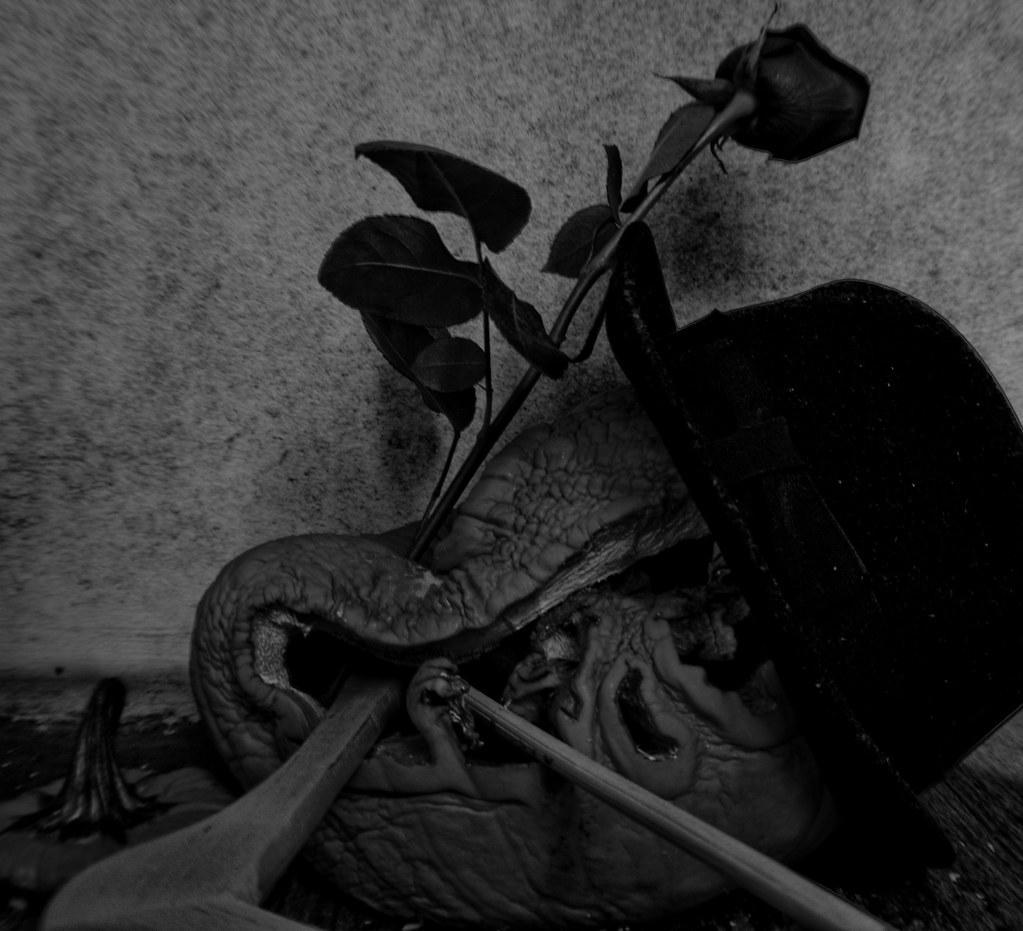 shadow in the rose garden