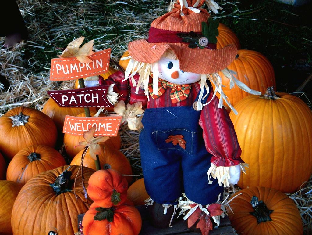 Halloween In Hawaii | Kahului Pumpkin Festival | Belindah ...
