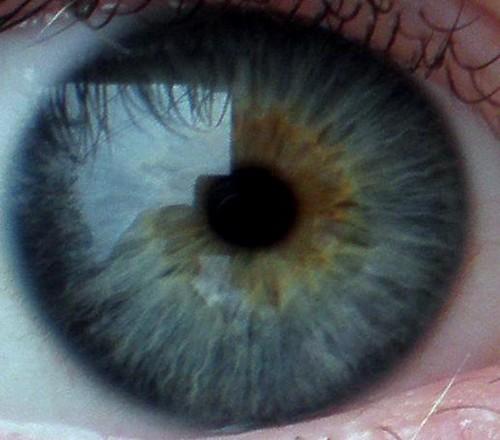 Eye Closeup A Really Good Pic Of My Eye Closeup It