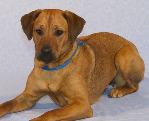 Find Adoption Dogs