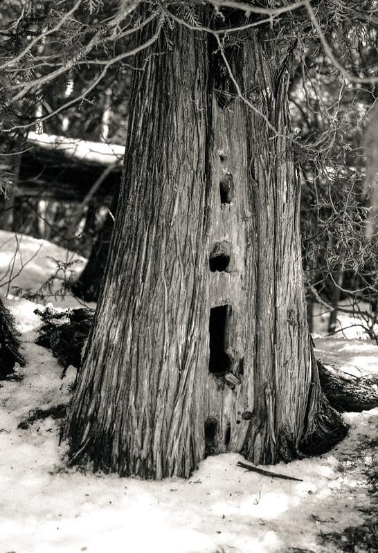 Holes in the Cedar_