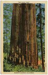 Boy Scout Tree_Redwood Highway_tattteredandlost | by tattered and lost attic