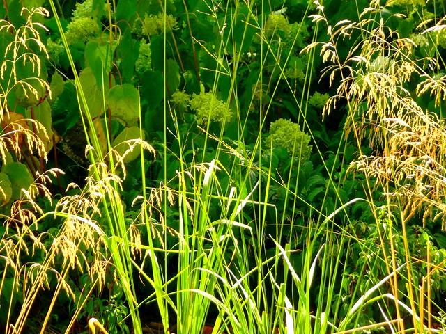 Plantes vertes et vieillies dans la nature flickr for Plantes vertes
