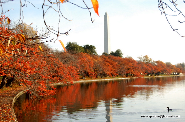 tidal basin washington dc tidal basin cherry trees in. Black Bedroom Furniture Sets. Home Design Ideas