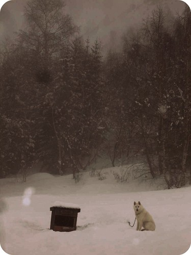 Dog in the snow | by N.C.H