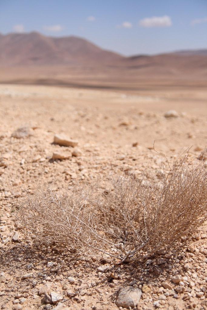 syrian desert ed brambley flickr