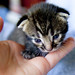 Tiny tabby kitten